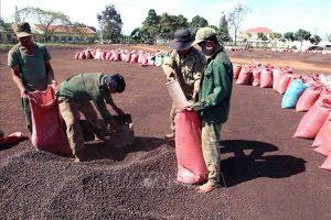 Tín hiệu tích cực từ xuất khẩu cà phê ngay đầu xuân Tân Sửu